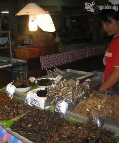 insectos tailandia