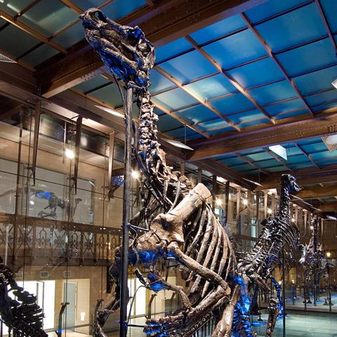 museo ciencias bruselas