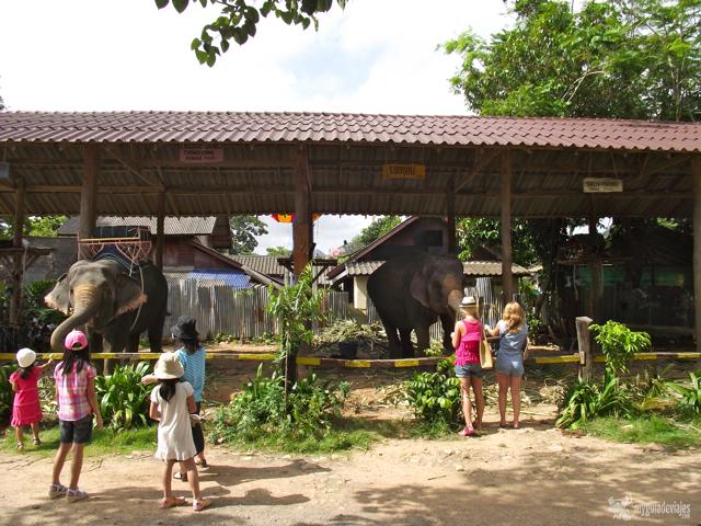 elefantes en Ko chang