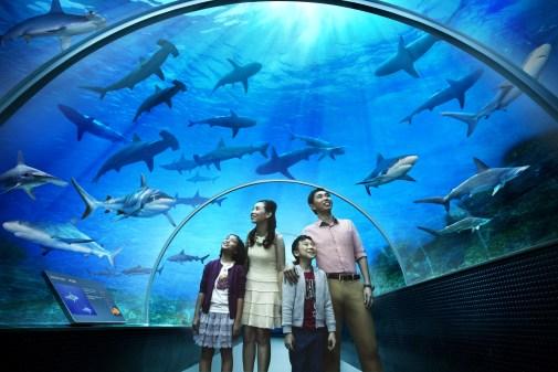 El acuario más grande del mundo, Singapur
