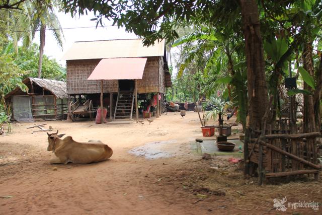 buey en camboya