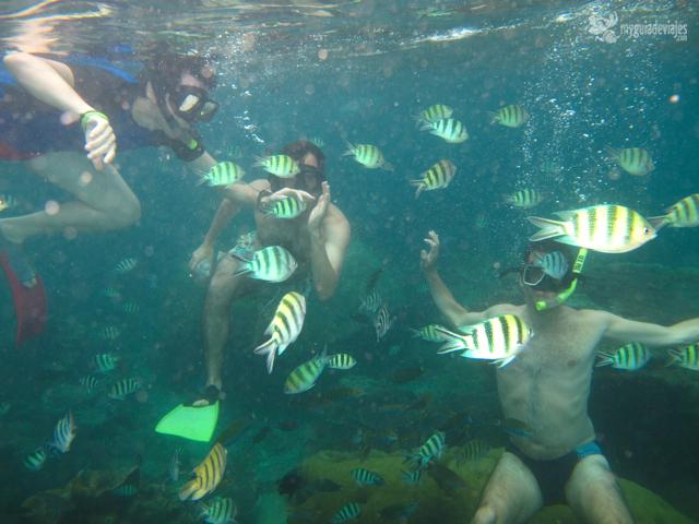 Rodeado de peces de colores