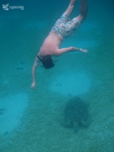 tortugas perhentian