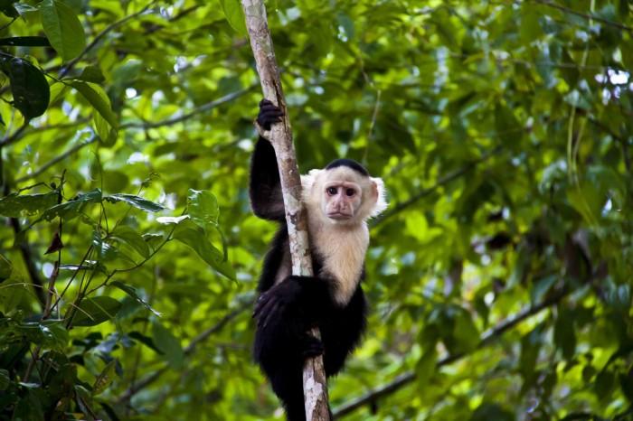 Fauna autóctona. Imagen de ojodigital.com