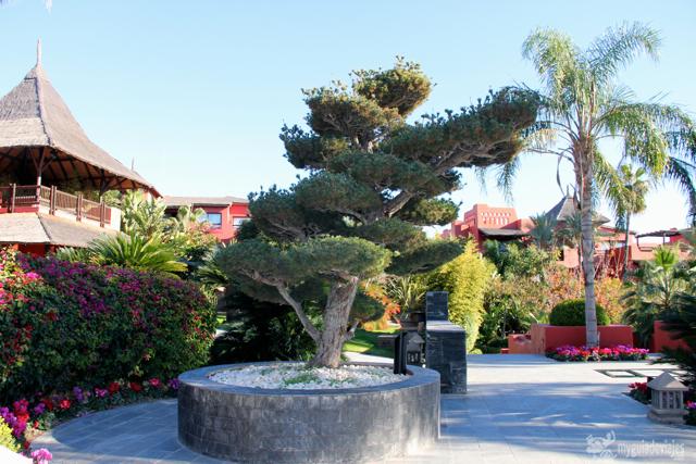 bonsai asia gardens