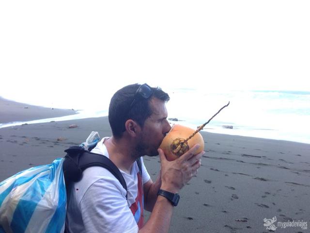 Coco salvador en Costa Rica....