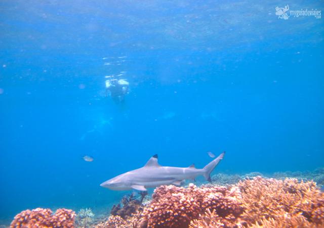 snorkel con tiburones