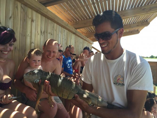 iguana en slide splash