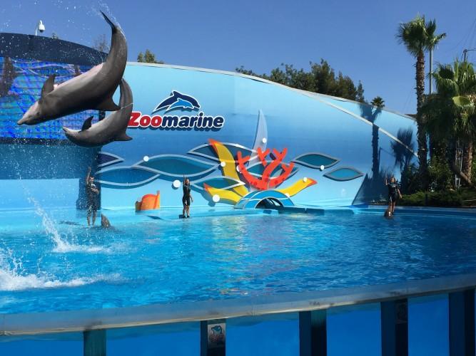 delfines zoomarine