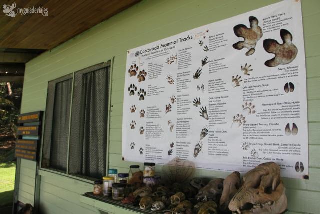 Información y cráneos de animales de corcovado.