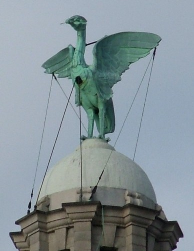Liver bird. Fuente: wikipedia