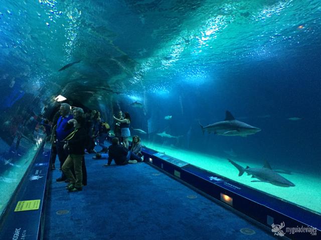 Acuario con tiburones