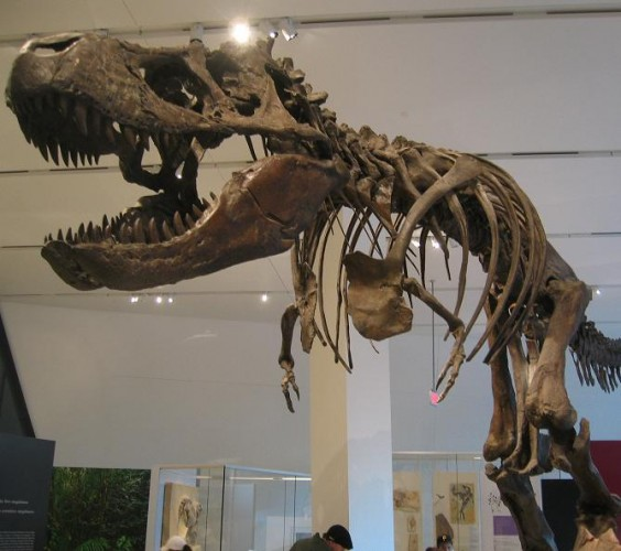 T Rex en el Mom. Wikipedia.org
