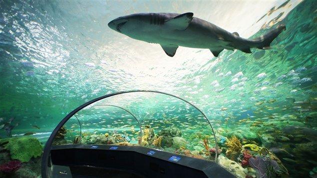 Tiburones en Toronto. www. rcinet.ca/es