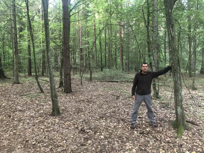 El bosque mágico de Bialowieza.