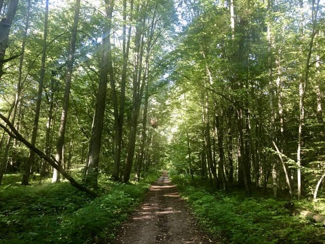 bosque polonia