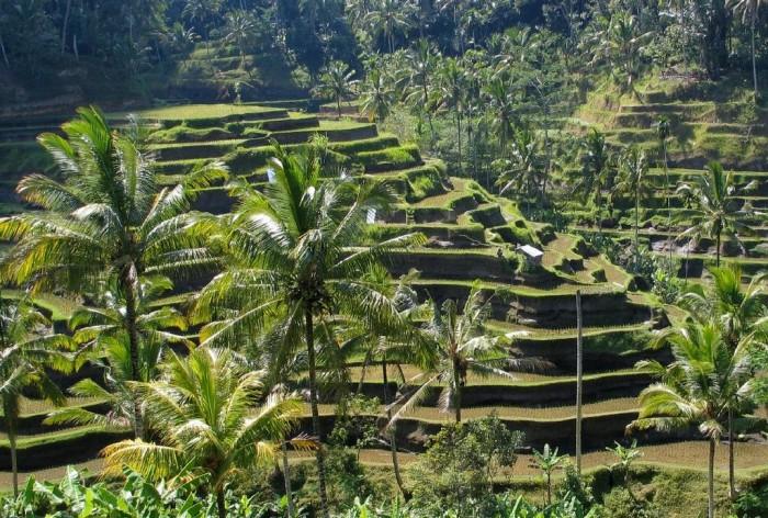 1024px-Bali_